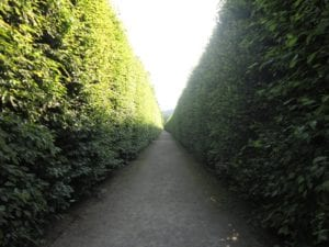 Shining-esque maze within the garden